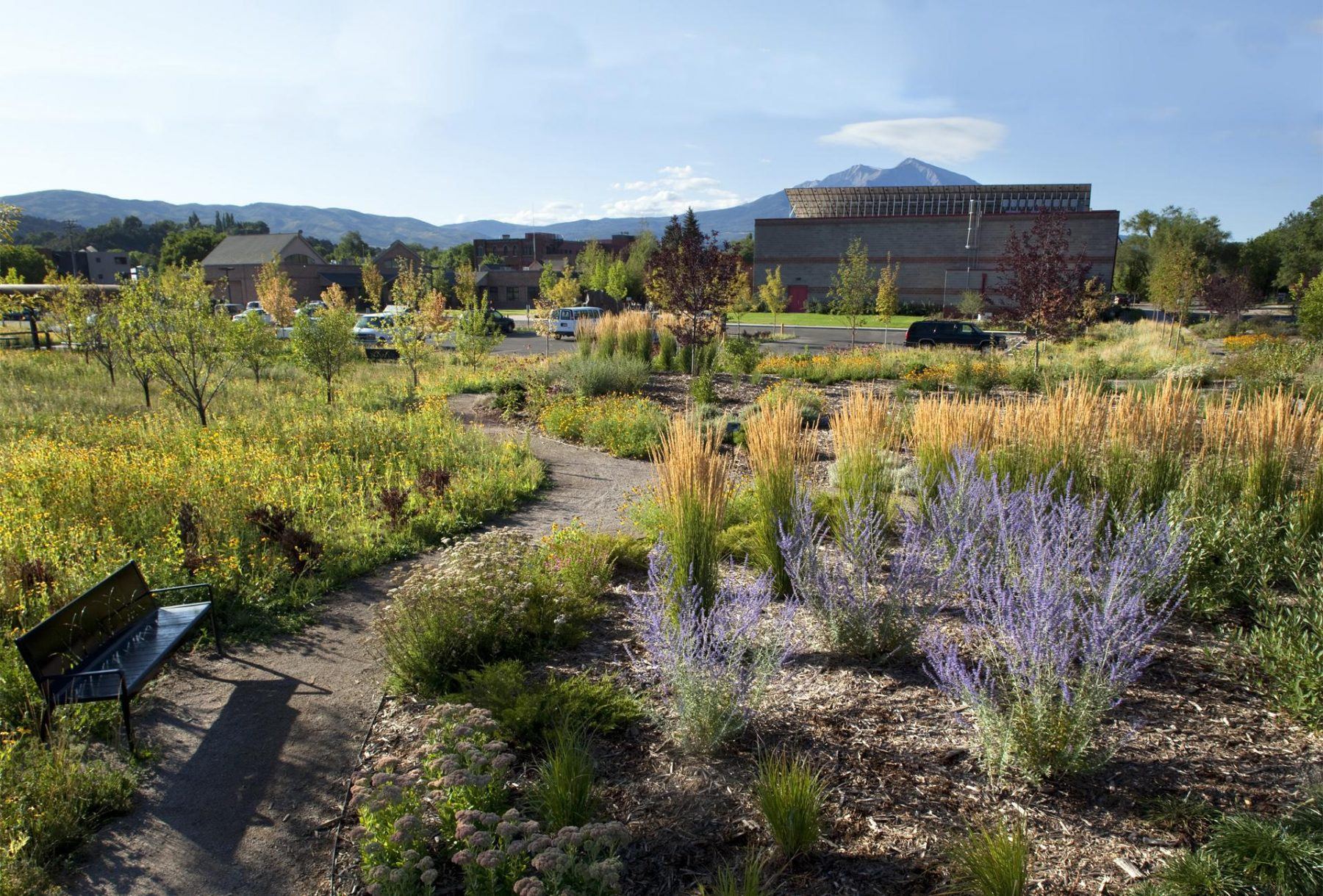 Carbondale Recreation Center Landscape Architecture